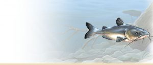 channel-catfish-painting